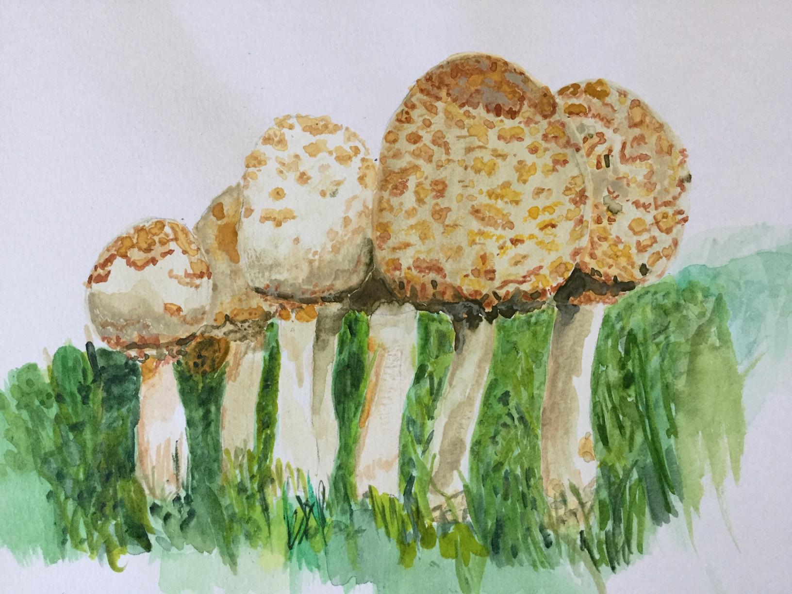 Golden Mushrooms 2020
